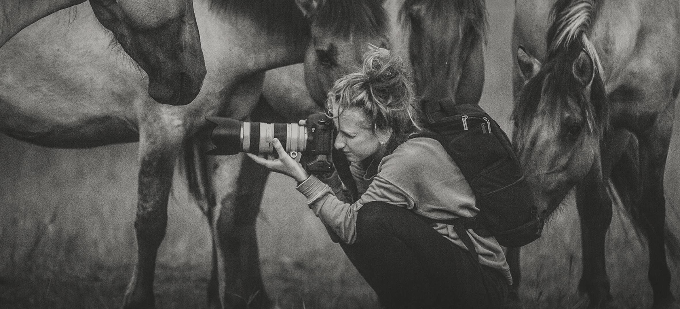 Pferde Herde Konik Liebenthaler Pferdefotografin